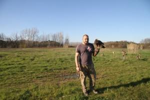 falco di harris adulto - nome nebbia