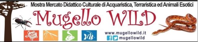 mugello-wild