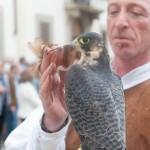 rievocazioni storiche falconeria toscana 4