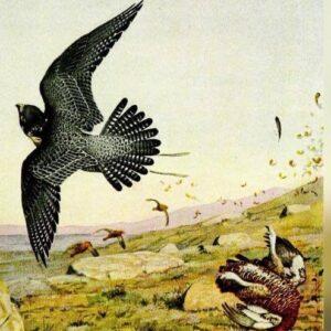 http://www.anticafalconeriatoscana.it/attivita/bird-control/
